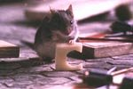 Mouse Hunt - (c) 1997 DreamWorks Pictures