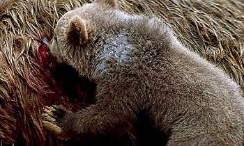 The Bear / L'Ours
